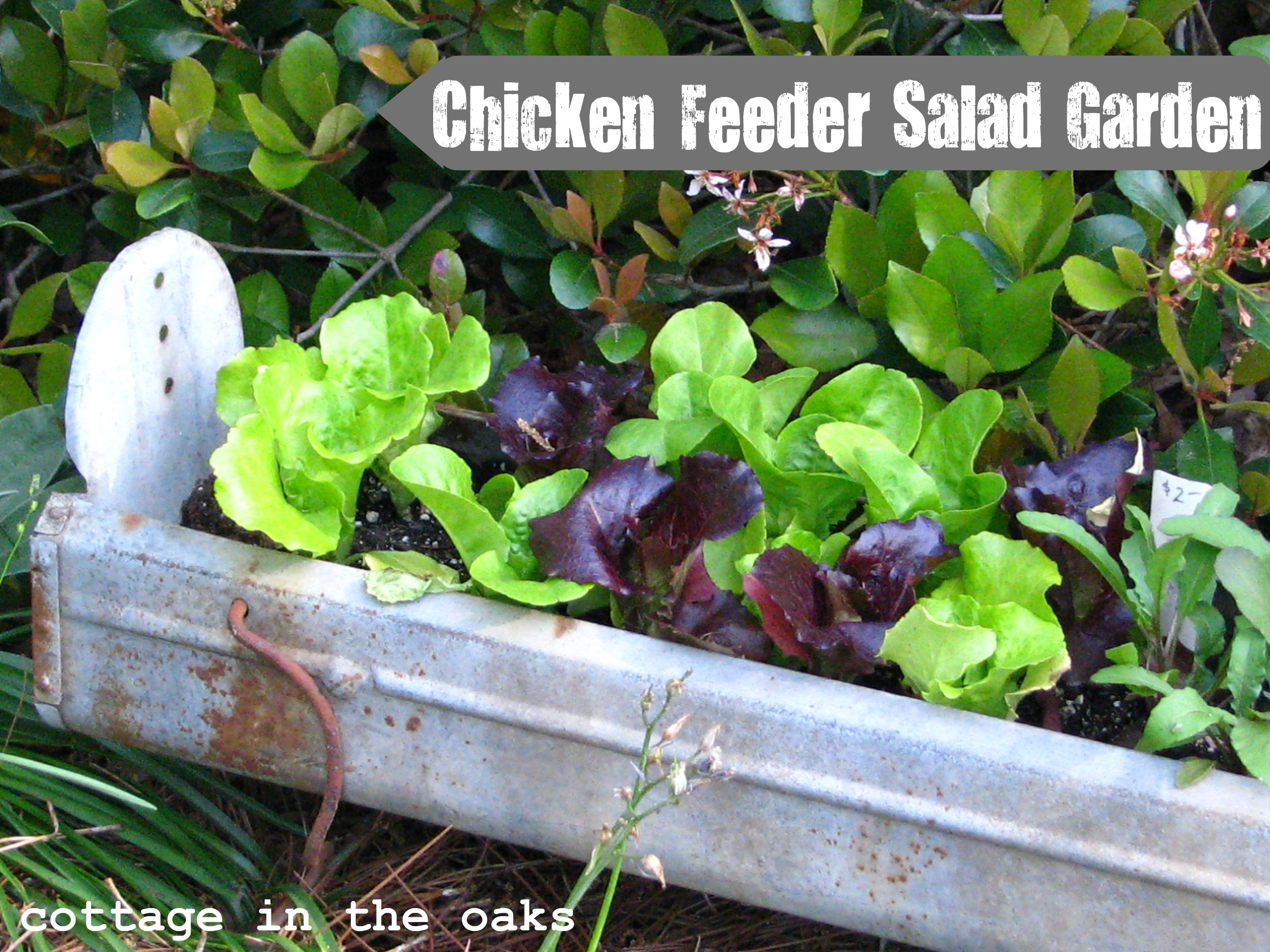 squirrel garden ball chapelwood anit premium bird anti feeder products suet
