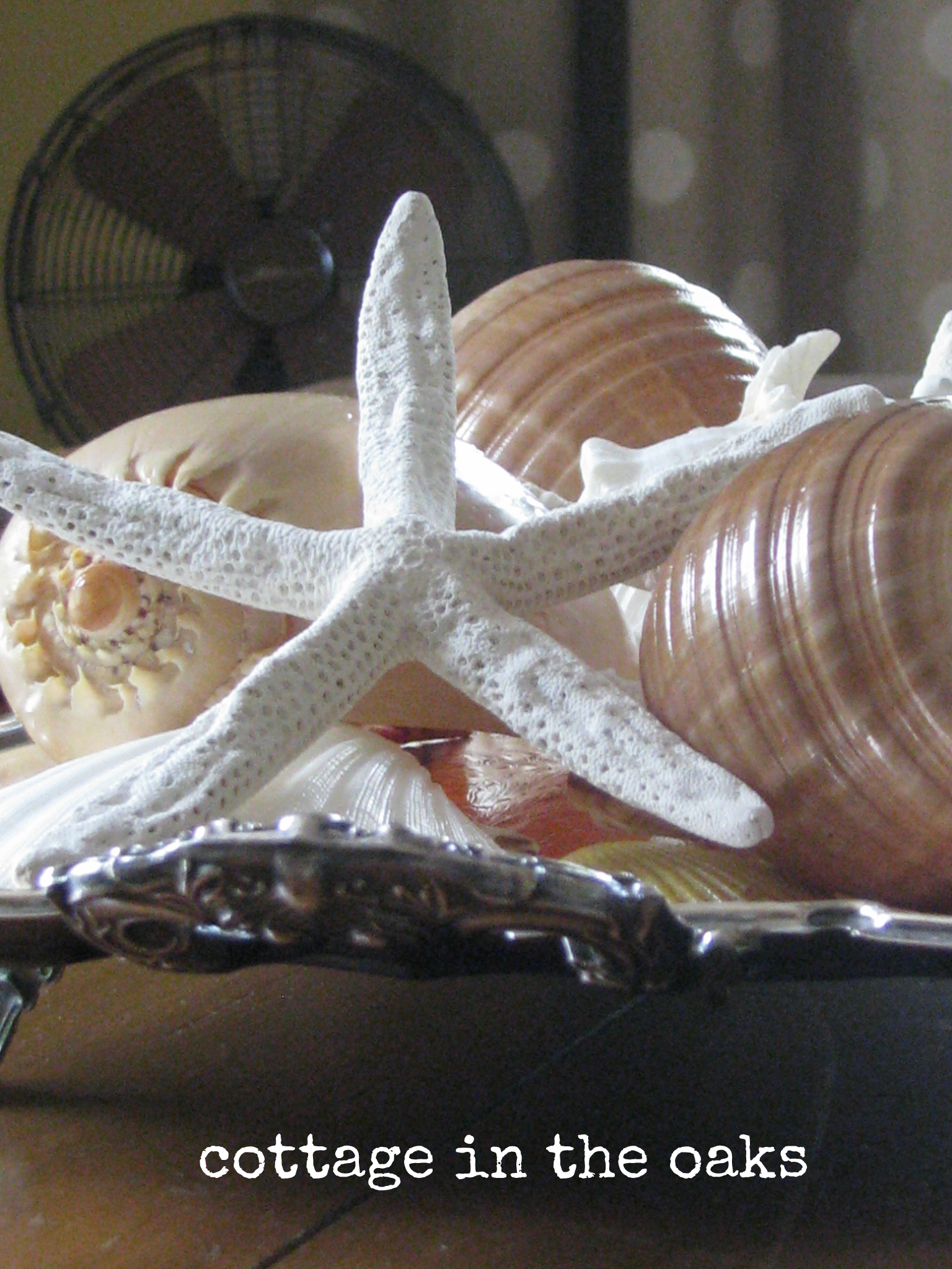 Decorating With Seashells Cottage In The Oaks