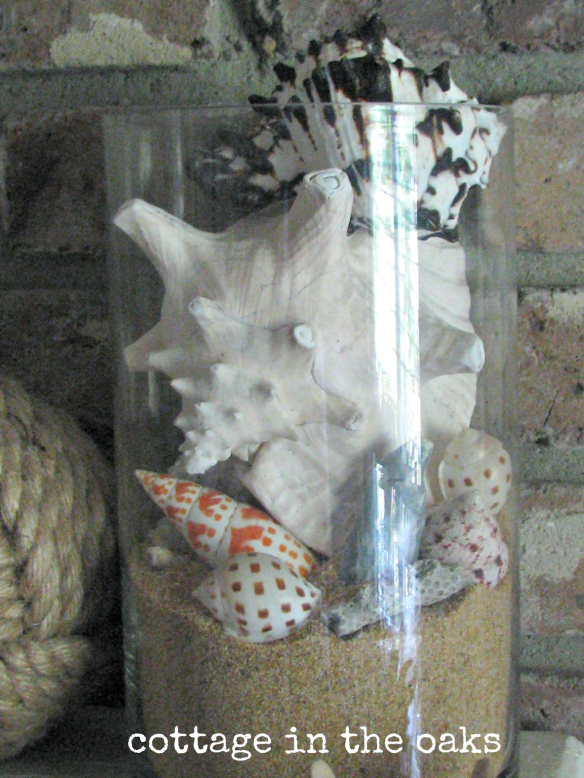 seashells in jar