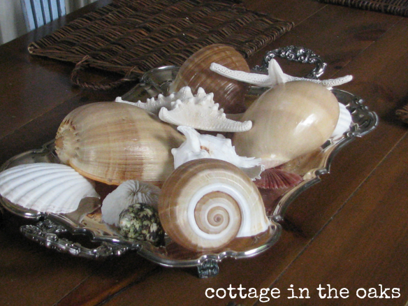 seashells in silver tray