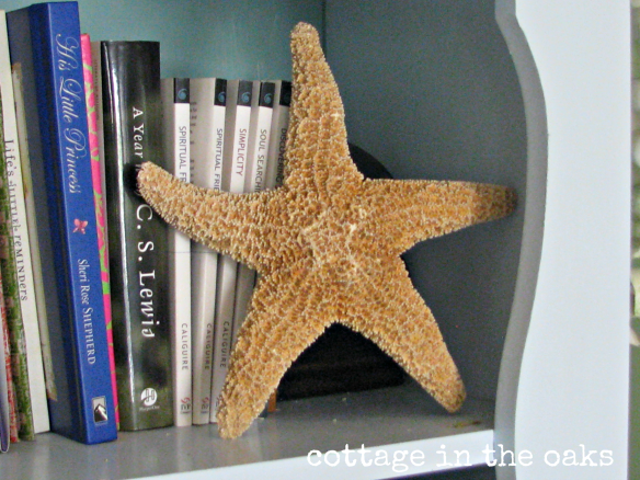 starfish on shelf
