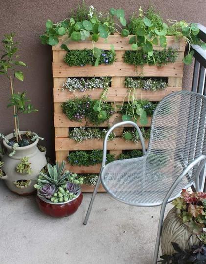 garden in a pallet