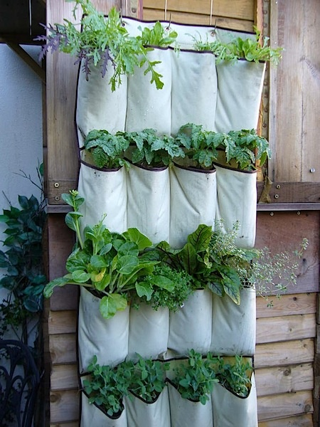 garden in a shoe bag