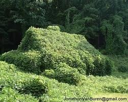 Kudzu Eating a Building
